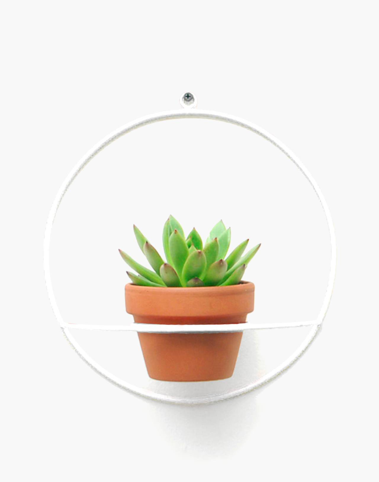 NEWMADE LA Circle Wall Planter in white image 1